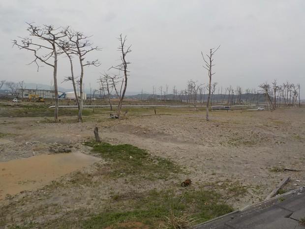 5.双葉海浜公園施工完了